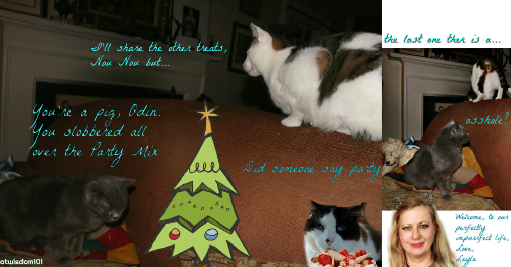 Catwisdom101_cats_Christmas