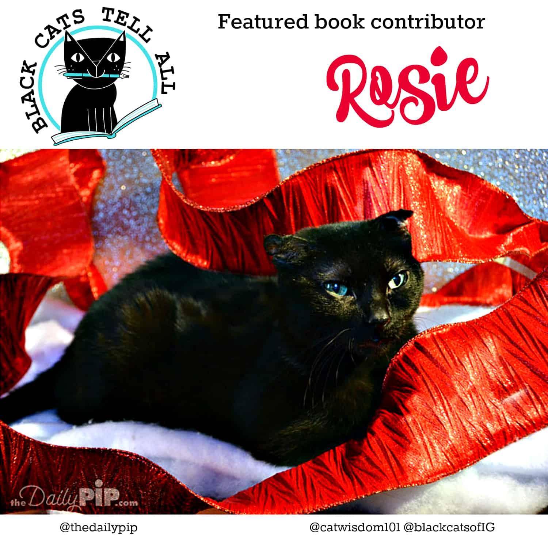 Feline Festival Of Lights Featuring Rosie & Izzy