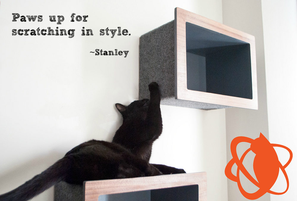 Stanley_black_cat_matters