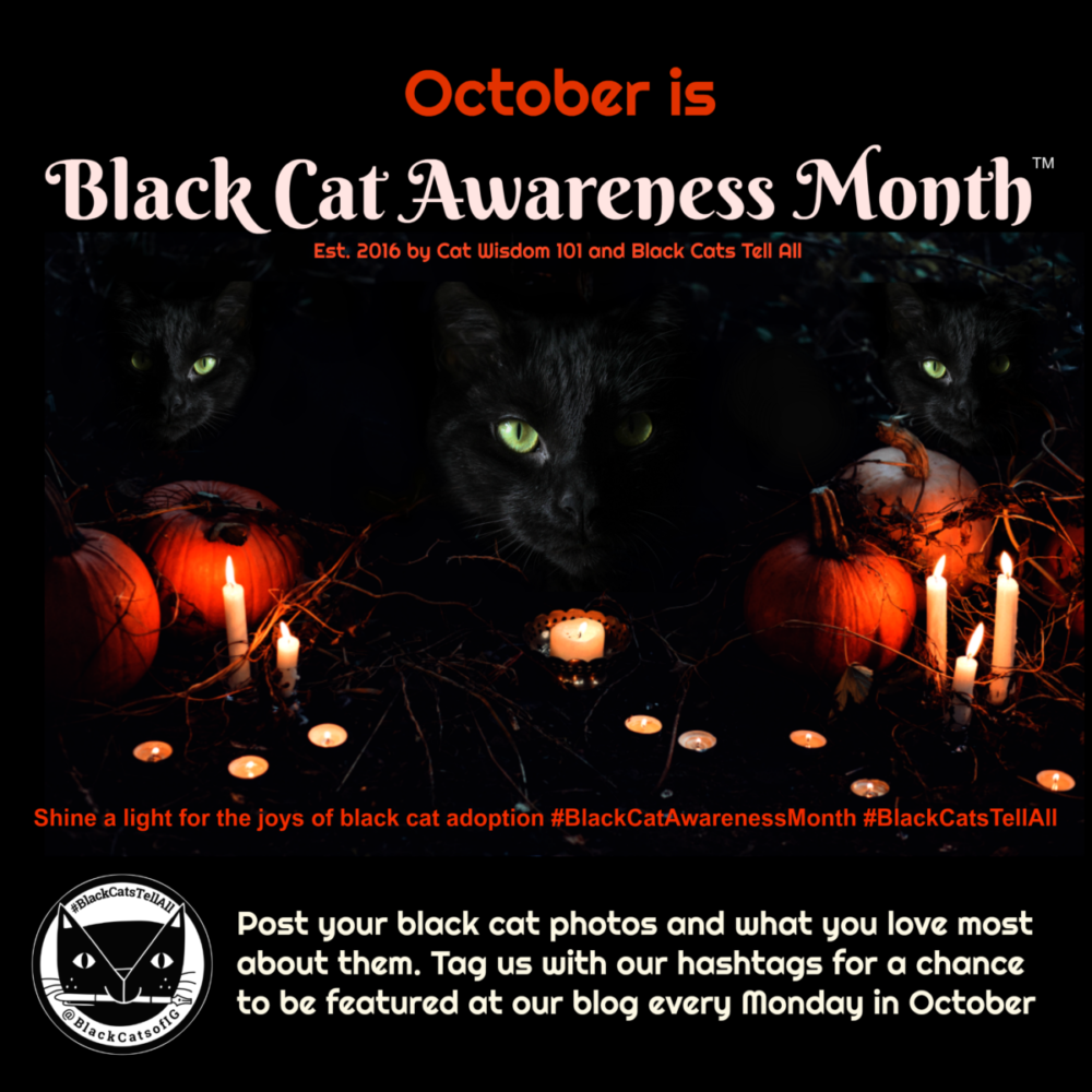 Black Cat Awareness Month™is Spreading  & 9 New Reasons to Adopt Black Cat