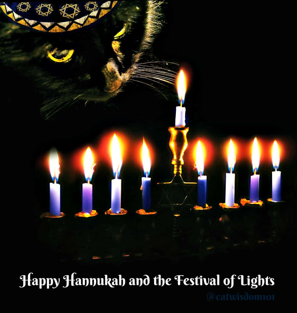 candles_cat_clyde_menorah_hannukah
