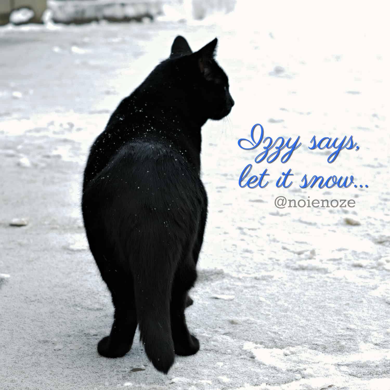 cat_snow_izzy