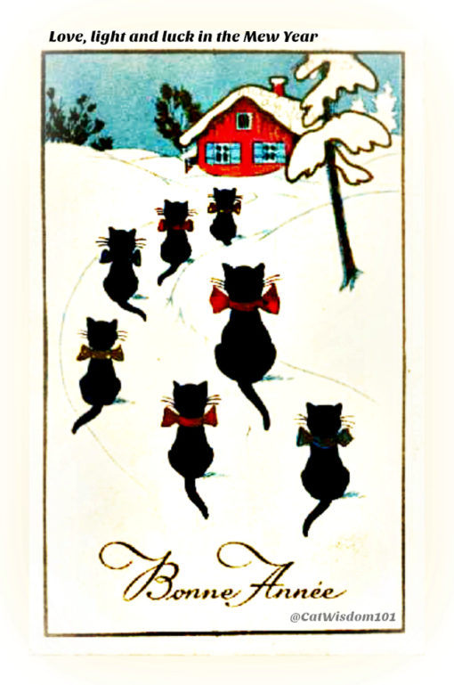 christmas-Black_cat French