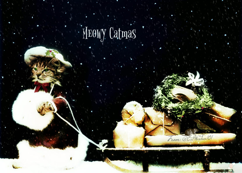vintage-christmas_photo_cat