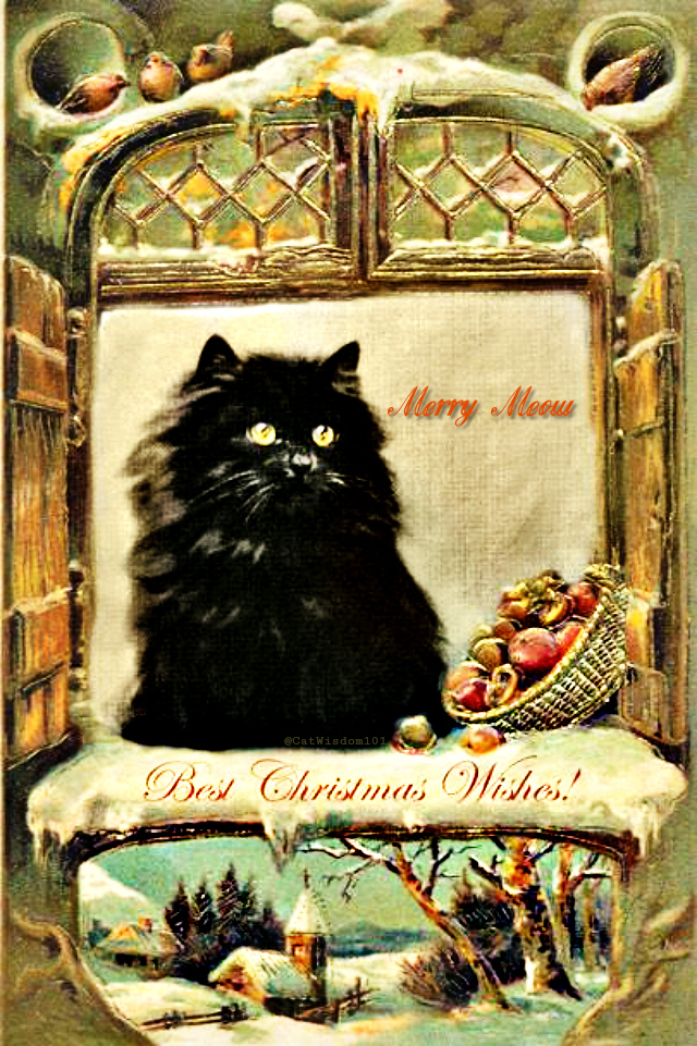 vintage_black_cat_window_christmas