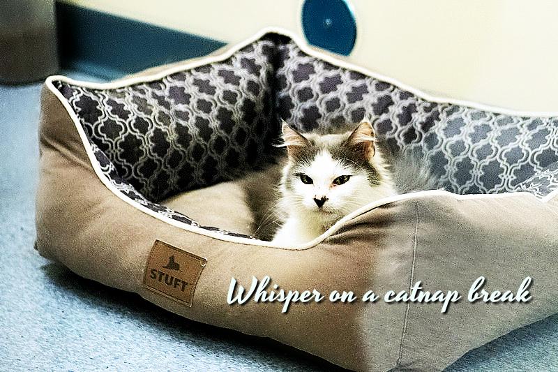Whisper's Story