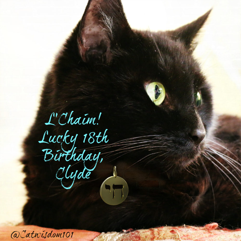 Clyde-cat_birthday_l'chaim