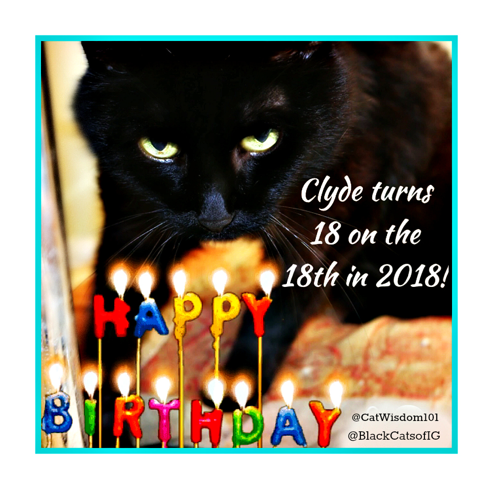 Why 18 is a Lucky Number and Clyde's 18th Cat Birthday Celebration