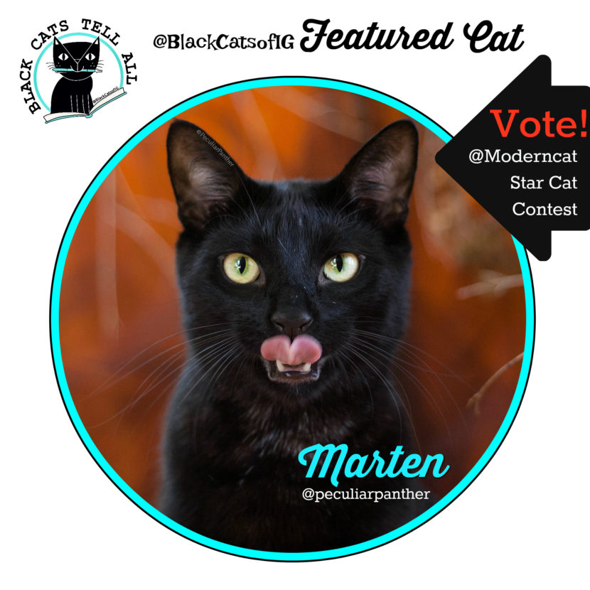 Marten_black_cat_panther