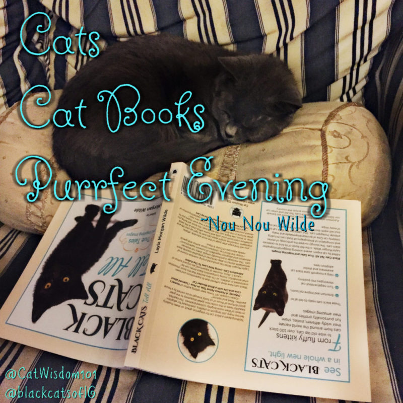 cat_books_quote