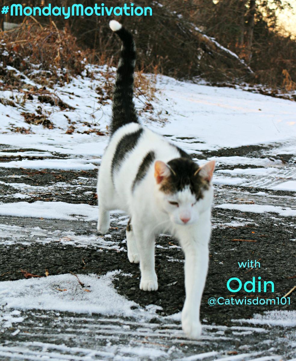 monday_motivation_cat_snow