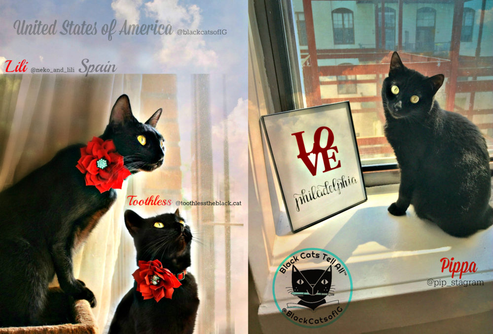 Black_cat_love_february_calendar_Pippa_Toothless