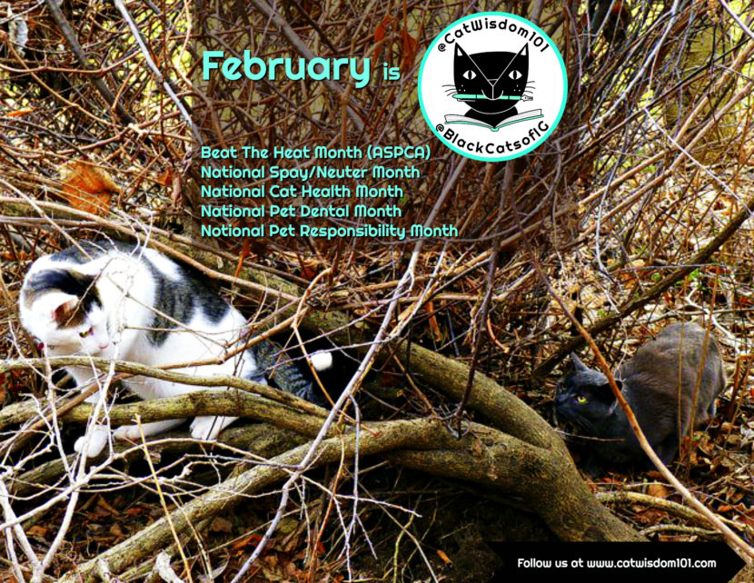February VIP Cat Holidays