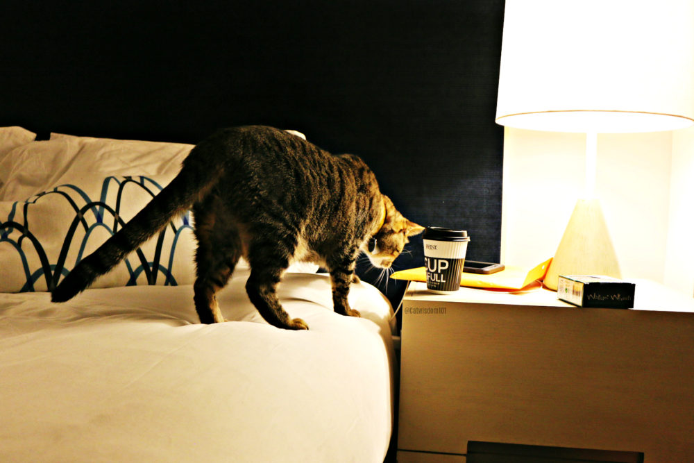 Oskar blind cat rip