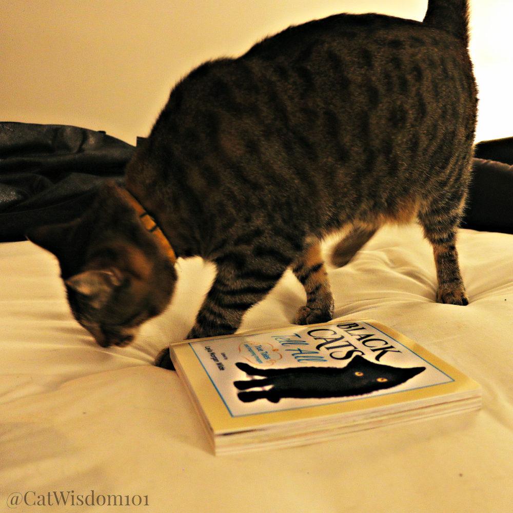 Oskar_blind_cat_blackcatstellall