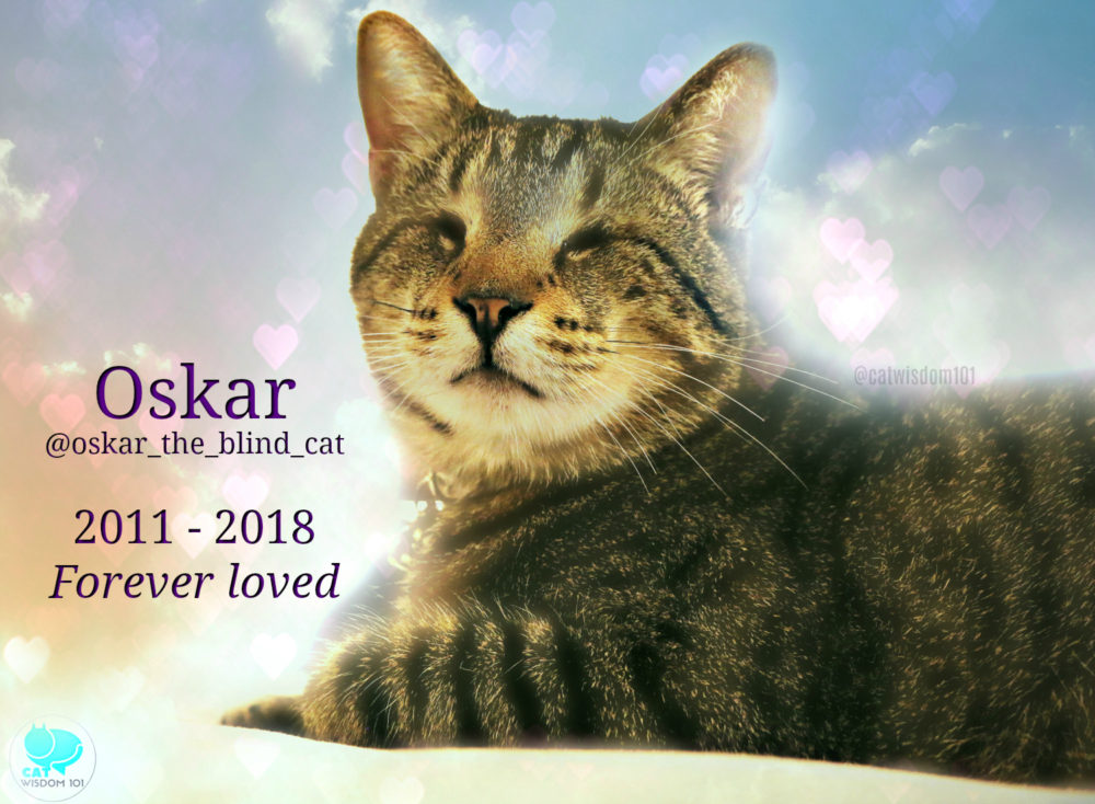 Oskar_blind_cat_forever