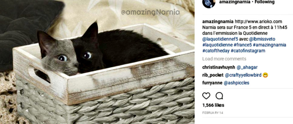 chimera_cat_narnia