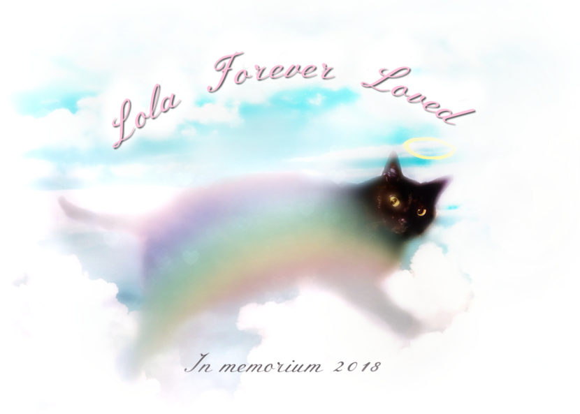 rainbow_cat_lola-forever-loved