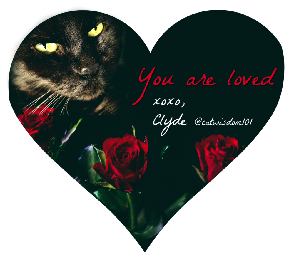red_roses_clyde_catwisdom101