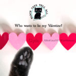 valentine_clyde_red_hearts_cat