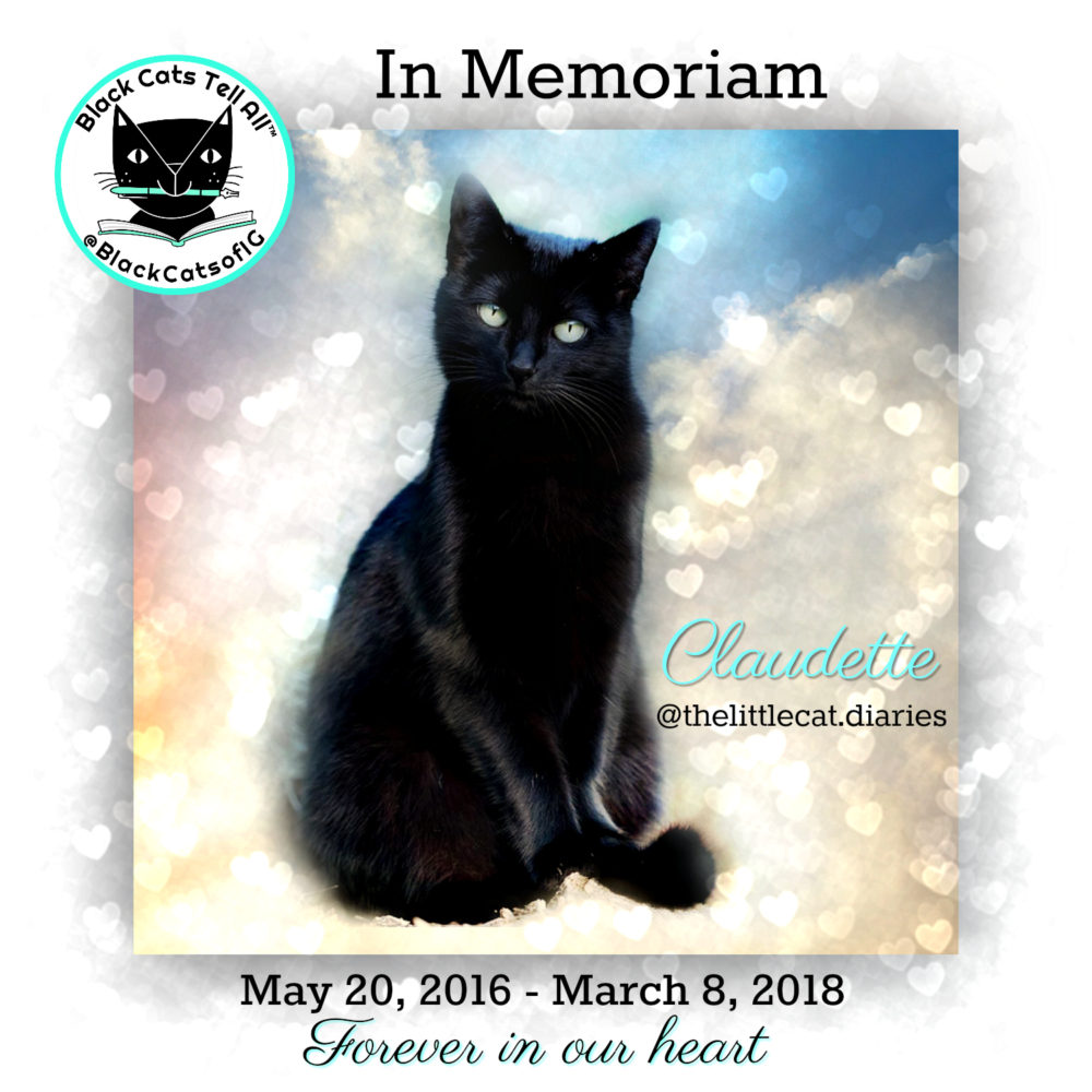 cat spring black singles Meet our cats below is a list of all of the wonderful cats living in our sanctuary each one is available to be sponsored you can make a direct difference in their lives by sponsoring them.