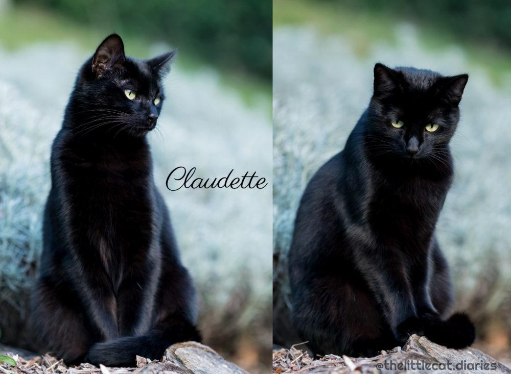 Claudette_memorial_cat
