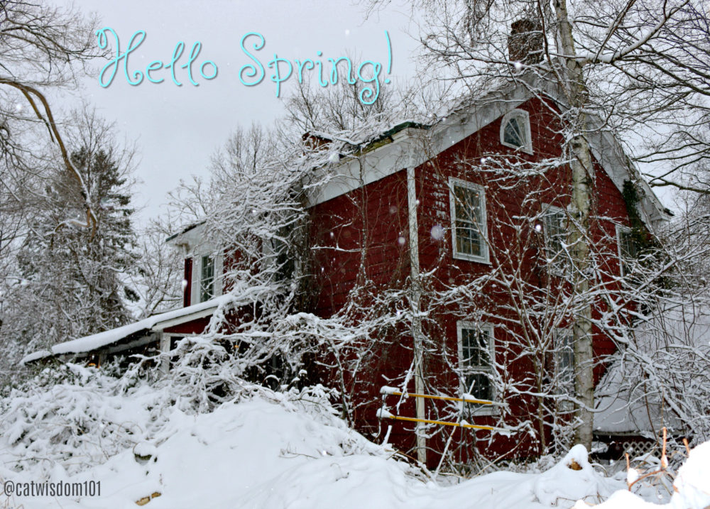 Hello_spring_snow_catwisdom101