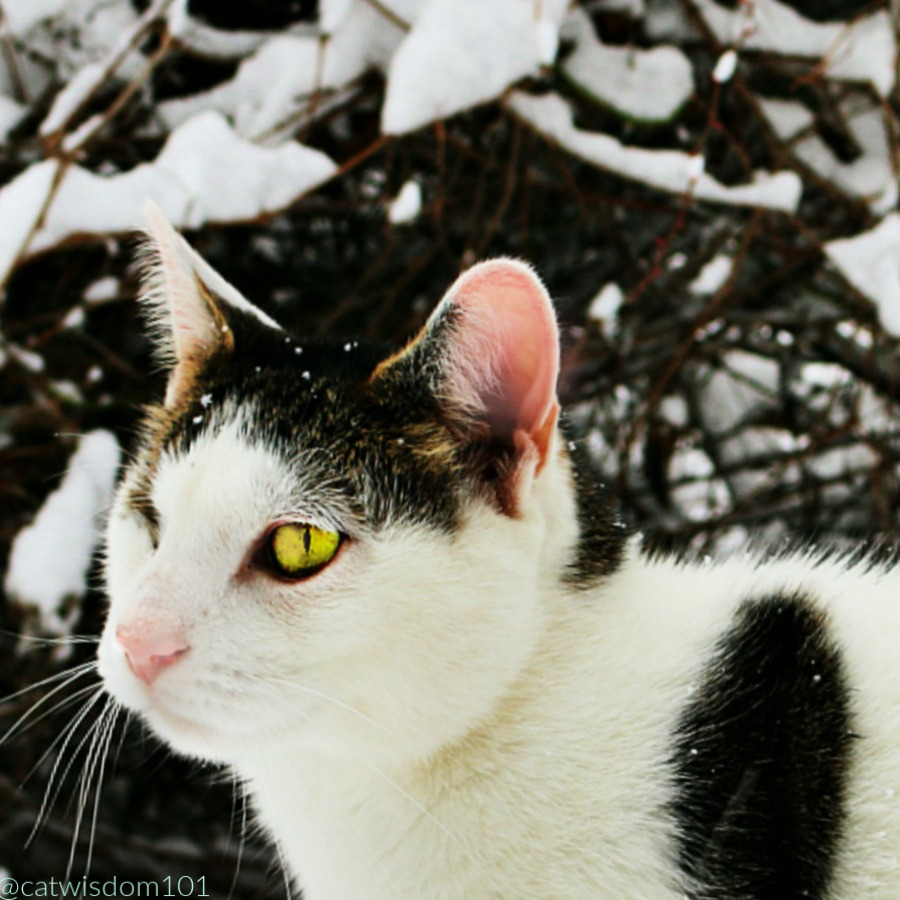 Odin_catwisdom101_snow_adventure Out Of This World Snow Cat Adventures