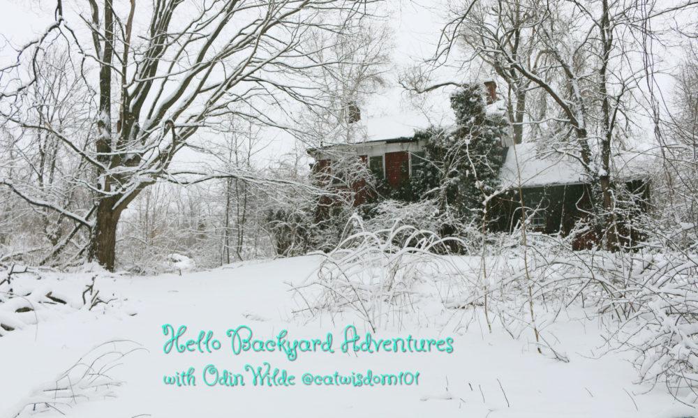 backyard_adventures_catwisdom101