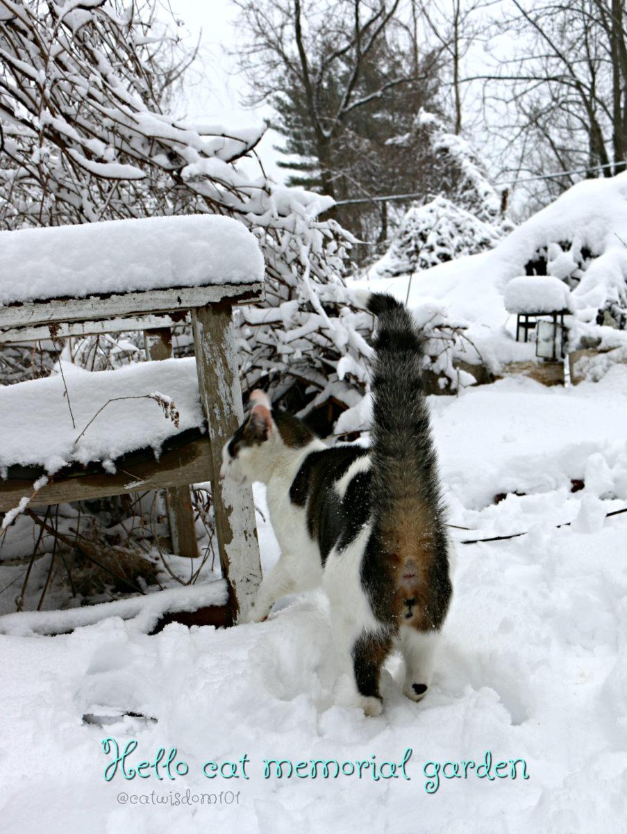 cat_memorial_garden_snow_catwisdom101