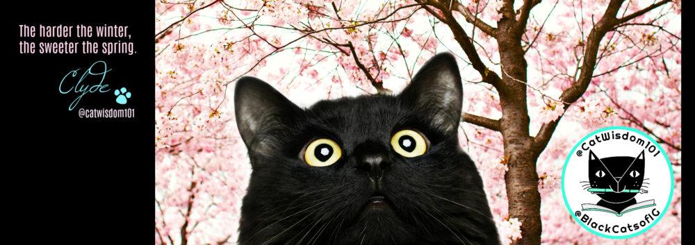 cherryblossoms_spring_catwisdom101