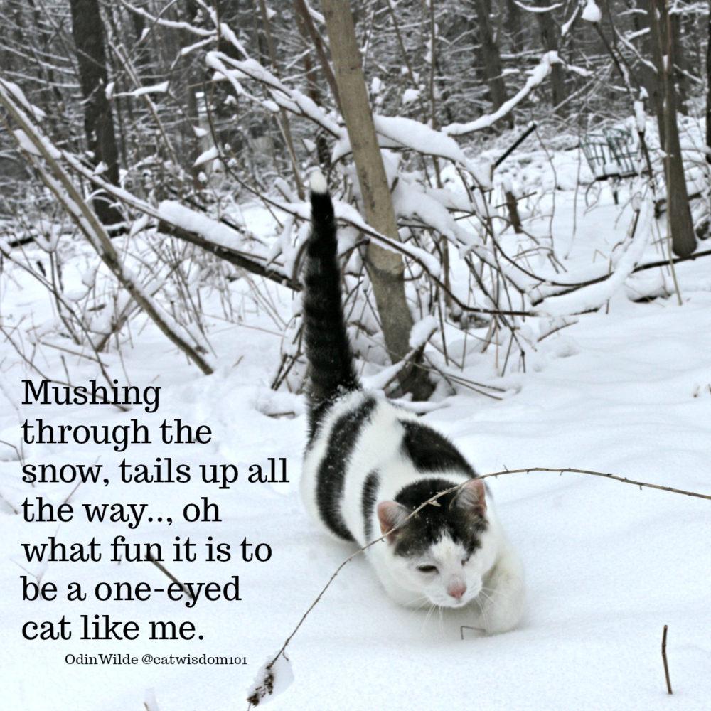snow_cat_catwisdom101