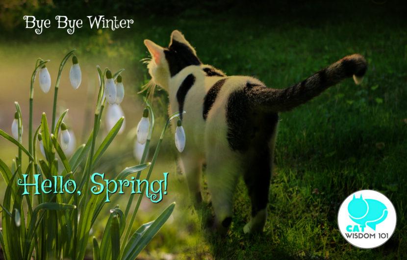 snowdrops_spring_Equinox_odin