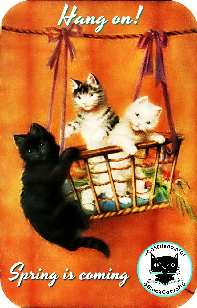 vintage_spring_cats_hang on_basket