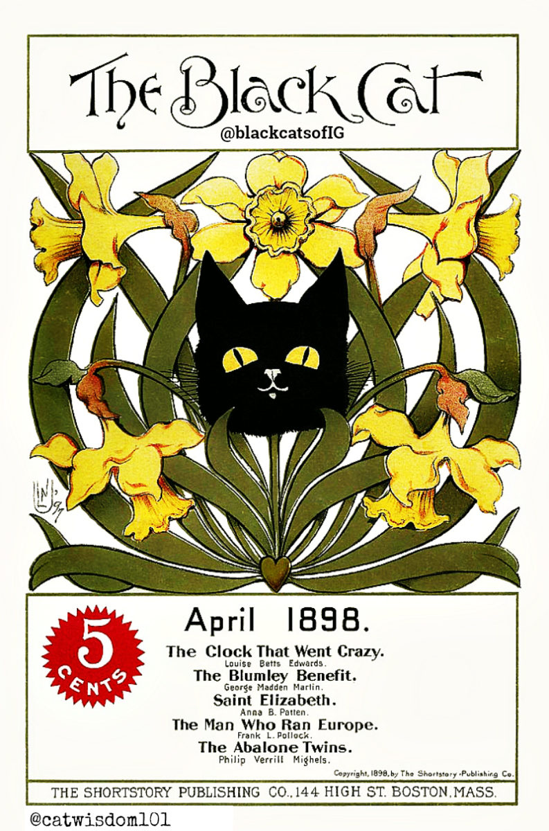 Black Cat_april_1898_daffodils