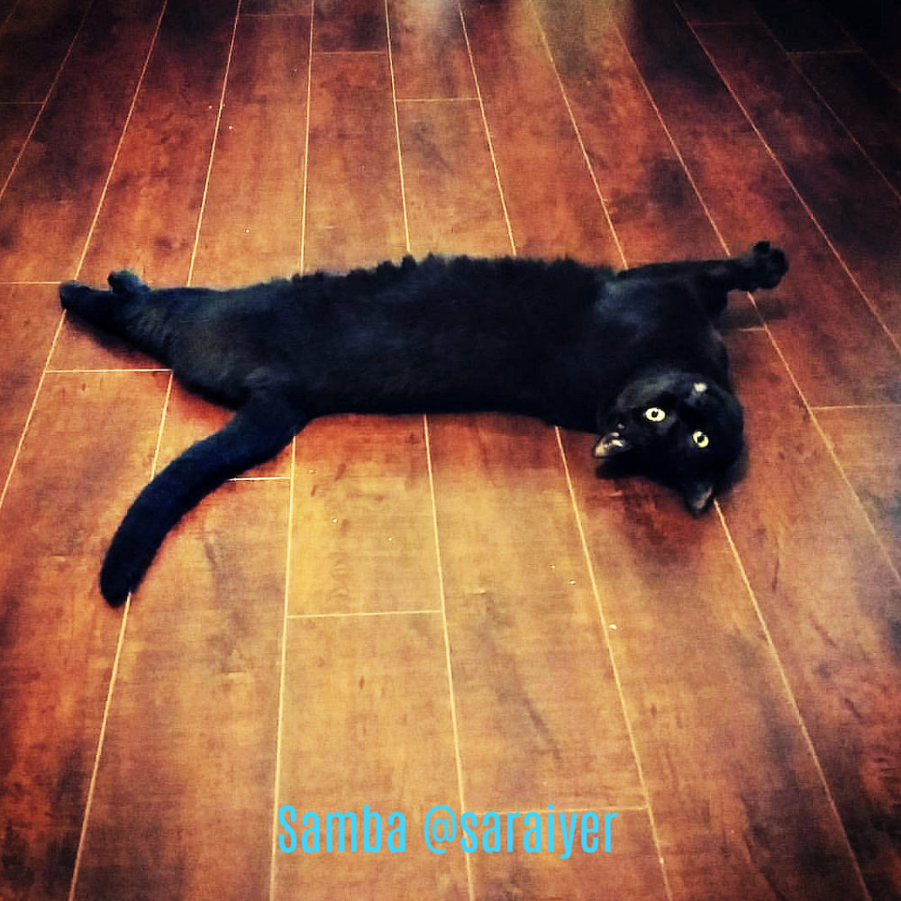 Samba_purrrcast_cat