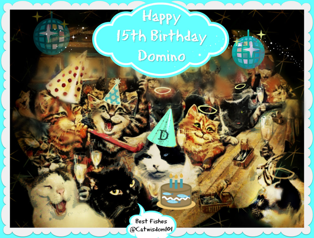 cat wisdom 101 birthday party for domino