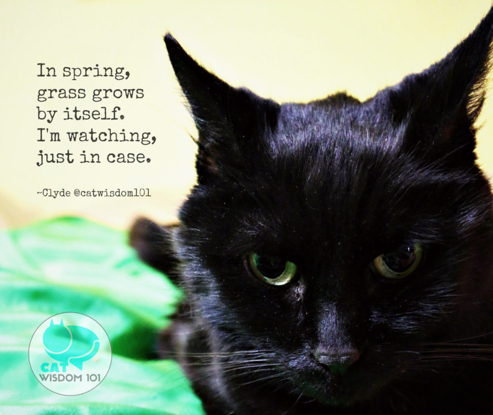 clyde_black_cat_spring_quote