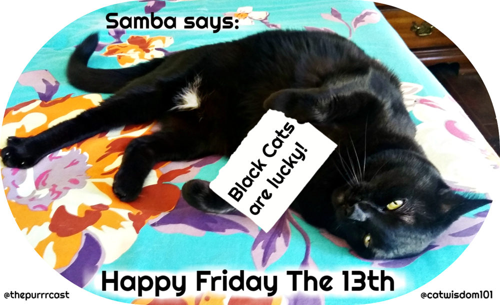 Lucky Black Cat Friday The 13th With Purrrcast Podcast Muse Samba