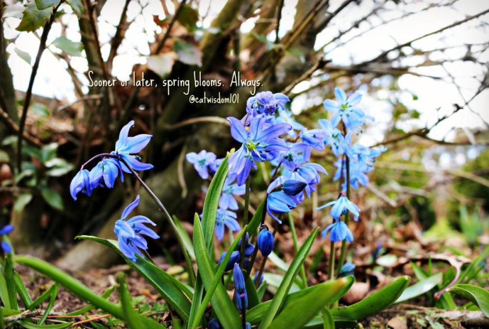 spring_quotes_blue_scilla-e1523279002586 Feline Monday Motivation With Cranky Cats