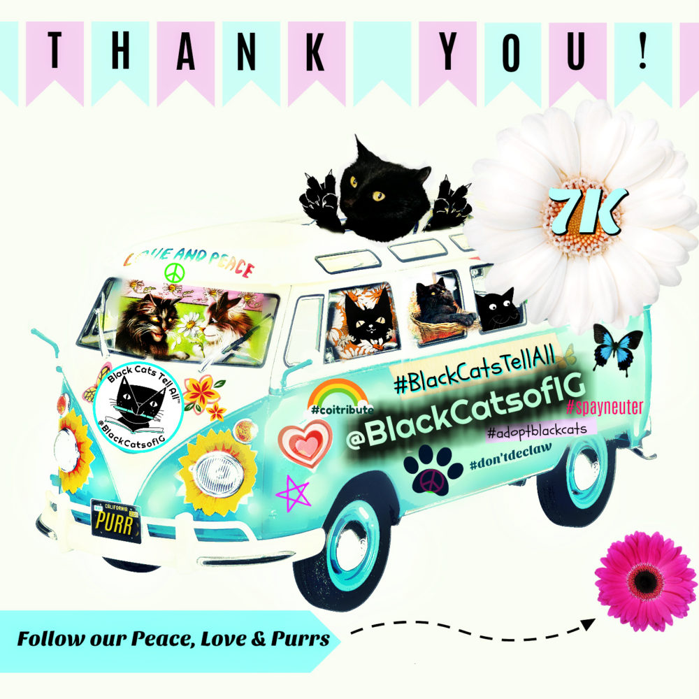 vw_bus_blackcatsofig_thank you