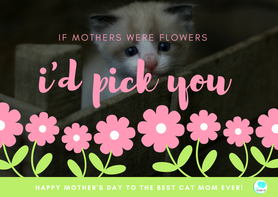 Purrfect Mother's Day For Pet Moms, Cat Rescue Moms, Kitten Foster Moms +