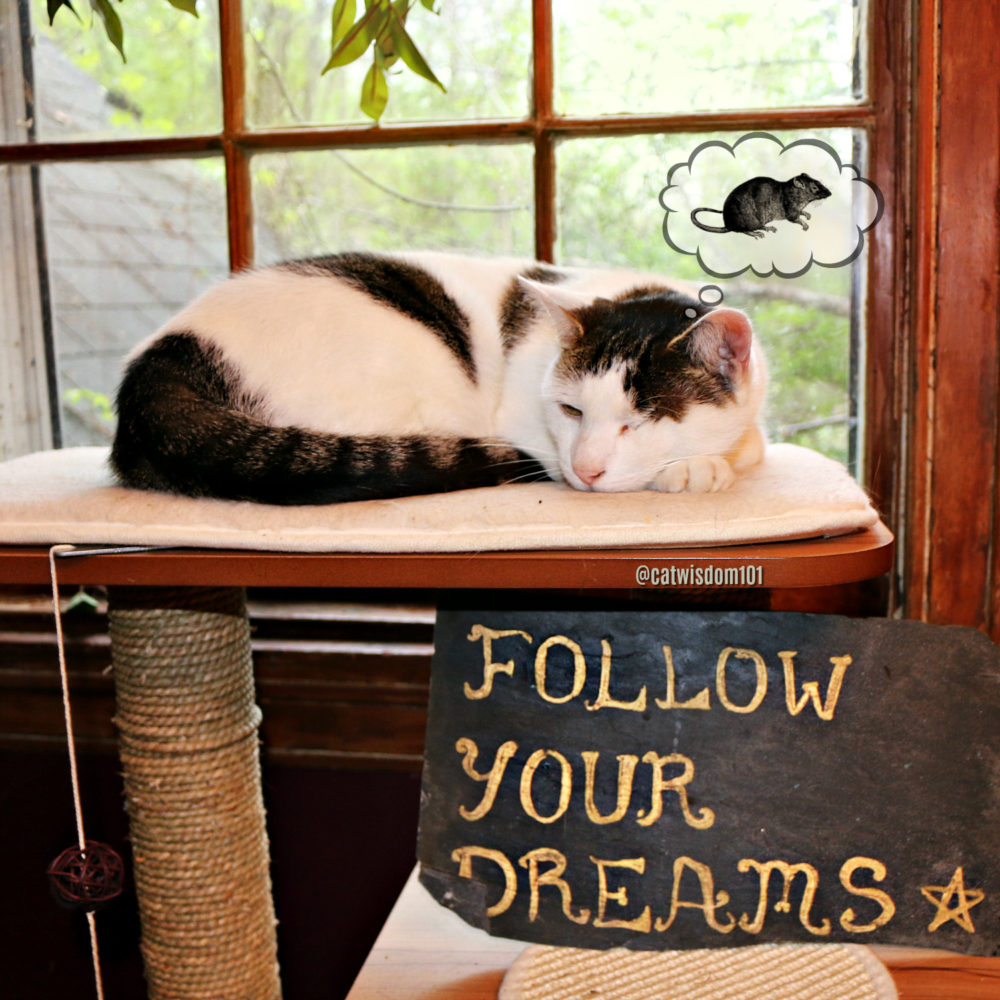 follow-your_dreams-odin_catwisdom101 9 Purrfect Kindness To Animals Quotes Illustrated