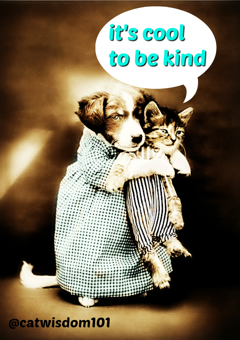 vintage_kind_cat_dog_quotes