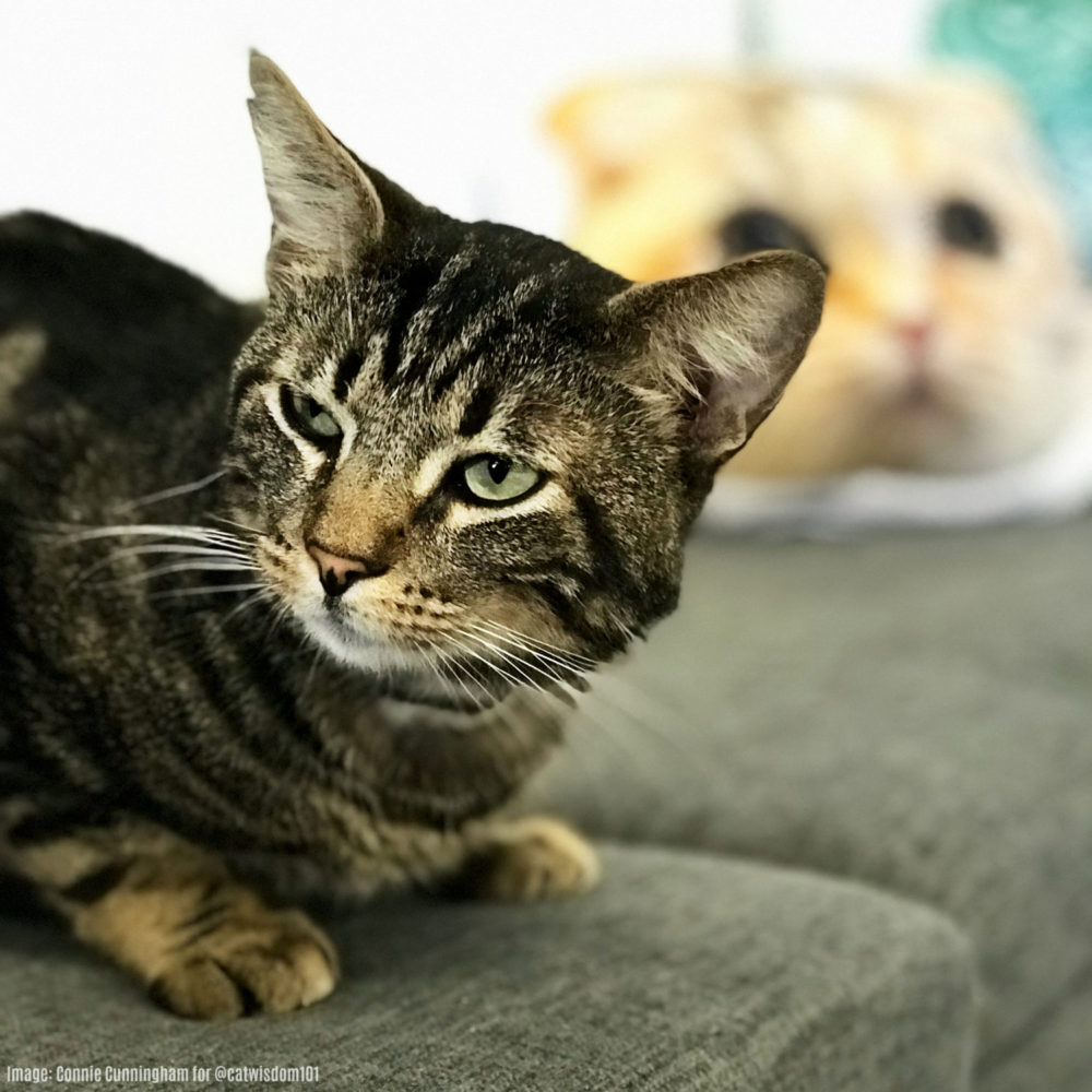 Catcafe_Lounge_LA_tabby