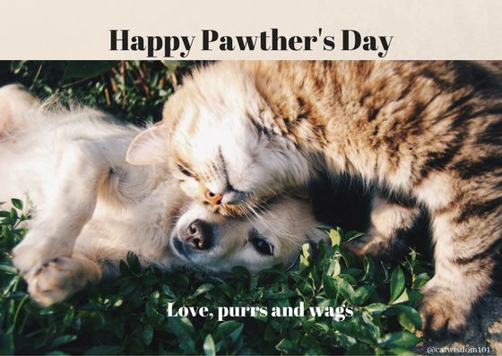 Happy Pawther's Day_catwisdom101