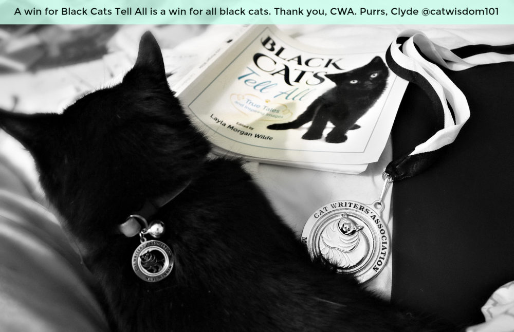 black_cats_tell_all_award_winning_book