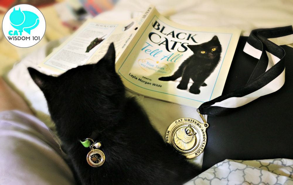 blackcatstellall_book_award_CWA