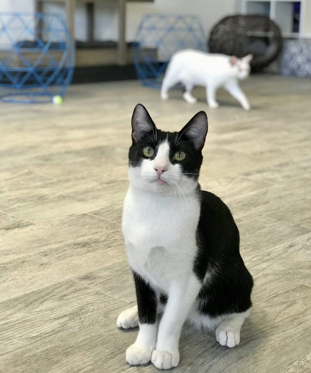 cat_cafe_LA_tuxie