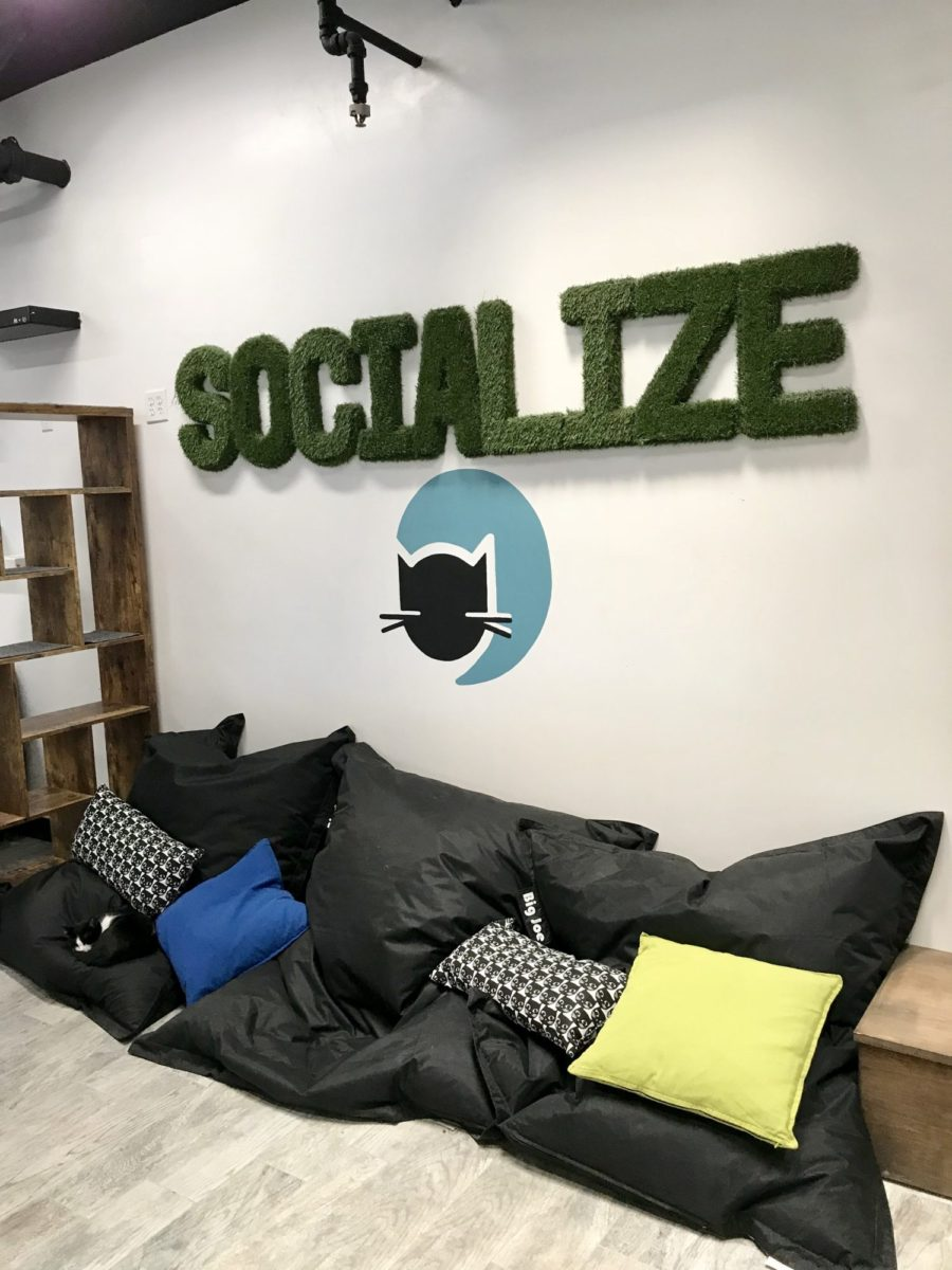 catcafe_la_socialize
